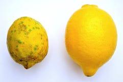 Gmo-mat för organisk mat kontra: citroner Arkivbild