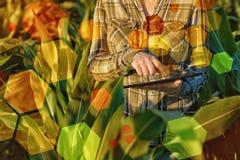 GMO nauka w kukurydzanym polu Fotografia Stock