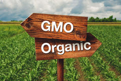 Gmo or Organic Farming Direction Sign. Gmo or Organic Farming Wooden Direction Sign in Agricultural Field stock photo