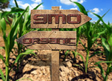 GMO and Organic Sign on a Corn Field Royalty Free Stock Image
