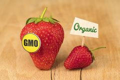 GMO and Organic Strawberry. On wooden board stock photography