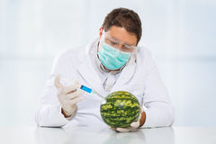 Gmo. Scientist with chemicals in a lab. Watermelon Stock Images