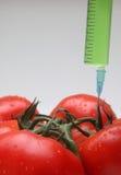 gmo-tomat Royaltyfri Foto