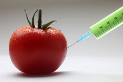 gmo-tomat Arkivfoton