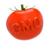 Gmo-tomat Royaltyfria Bilder