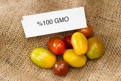 GMO tomater Fotografering för Bildbyråer