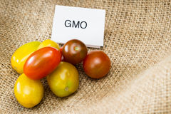 GMO tomatoes. Close up of tomatoes with a GMO label for consumer information royalty free stock images