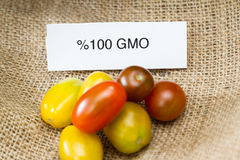 GMO tomatoes Royalty Free Stock Photography