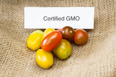 GMO tomatoes. Close up of tomatoes with a GMO label for consumer information stock photo