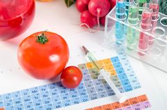 GMO tomatoes, syringe, test tubes in laboratory on periodic table. Royalty Free Stock Photography