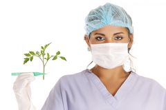 Gmo vegetable research stock photography