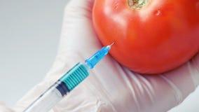 GMO zastrzyk z strzykawką w pomidorze rękami w białych rękawiczkach zbiory