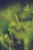 Gmoss verdes verdes, en el piso más forrest, brillando en el sol del verano Fotografía de archivo libre de regalías