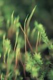 Gmoss verdes verdes, en el piso más forrest, brillando en el sol del verano Imagen de archivo libre de regalías