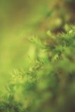 Gmoss verdes verdes, en el piso más forrest, brillando en el sol del verano Imágenes de archivo libres de regalías