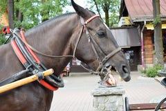 Gnägga häst arkivbilder