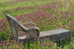 Gnäggande och växt av släktet Trifolium Arkivbilder