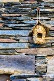 gnäggande på fasaden royaltyfria foton