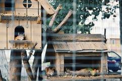 gnagareceller utanför Royaltyfri Fotografi
