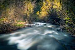 Gnanie lasu rzeka Fotografia Stock