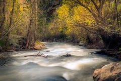 Gnanie lasu rzeka Zdjęcia Stock