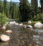 Gnanie rzeka w lesie Obrazy Stock