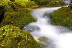 gnanie wody obraz royalty free