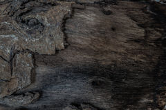 Gnarl και φλοιών ξύλινος κορμός Ξύλινη σύσταση Στοκ εικόνες με δικαίωμα ελεύθερης χρήσης