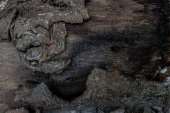 Gnarl drewnianego bagażnika i szczeka Drewniana tekstura Zdjęcie Stock