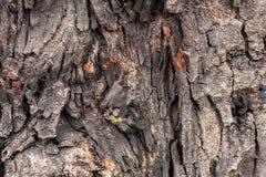 Gnarl drzewa zamykającego do kreatywnie wzoru dla projekta i tekstury Obraz Royalty Free