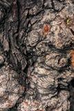 Gnarl drzewa zamykającego do kreatywnie wzoru dla projekta i tekstury Zdjęcie Royalty Free