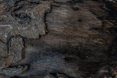 Gnarl och skälla den wood stammen Trä texturera Royaltyfria Bilder