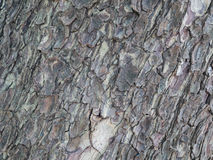 Gnarl och skälla textur från det gamla trädet Royaltyfri Bild