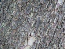 Gnarl teksturę od starego drzewa i szczeka Obraz Royalty Free