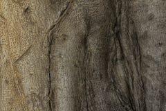 gnarled вал корней Стоковое Изображение