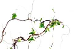 gnarled ветви Стоковое Изображение RF