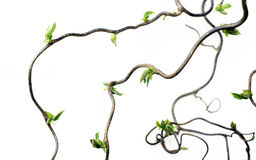 Gnarled branches stock image