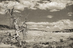 Gnarled dead tree Stock Photography