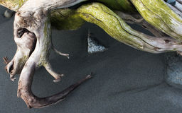 Gnarled driftwood Стоковое фото RF