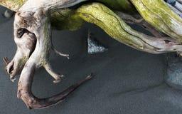 Gnarled driftwood Royalty Free Stock Photo