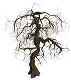 Gnarled old tree with bare branches stock photo