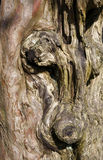 Gnarled old tree trunk. Background royalty free stock photo