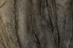 gnarled rotar treen Royaltyfri Bild