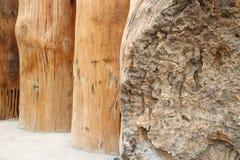 Gnarled teak wood timber Royalty Free Stock Image