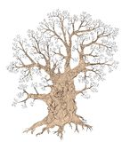 Gnarled tree Stock Photos