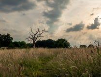 Gnarled Tree Fotografering för Bildbyråer