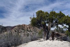 Gnarled Tree in Desolate Landscape Royalty Free Stock Photos