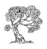 Gnarled tree with leaves Stock Images