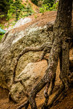Gnarled Tree Roots on Rocky Path Stock Photo