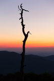 Gnarled tree on Skyline drive in Virginia stock images